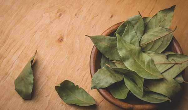 le foglie di alloro utilizzate per perdere peso